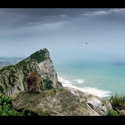 Gibraltar 4