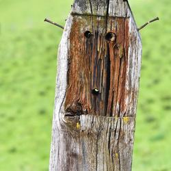 Wooden_face