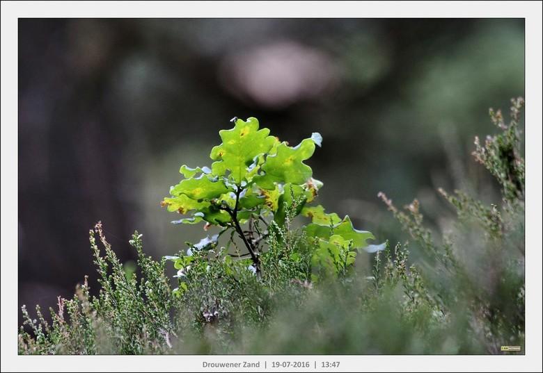 Helder groen in de zon - Drouwener Zand
