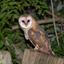 2nd Owl