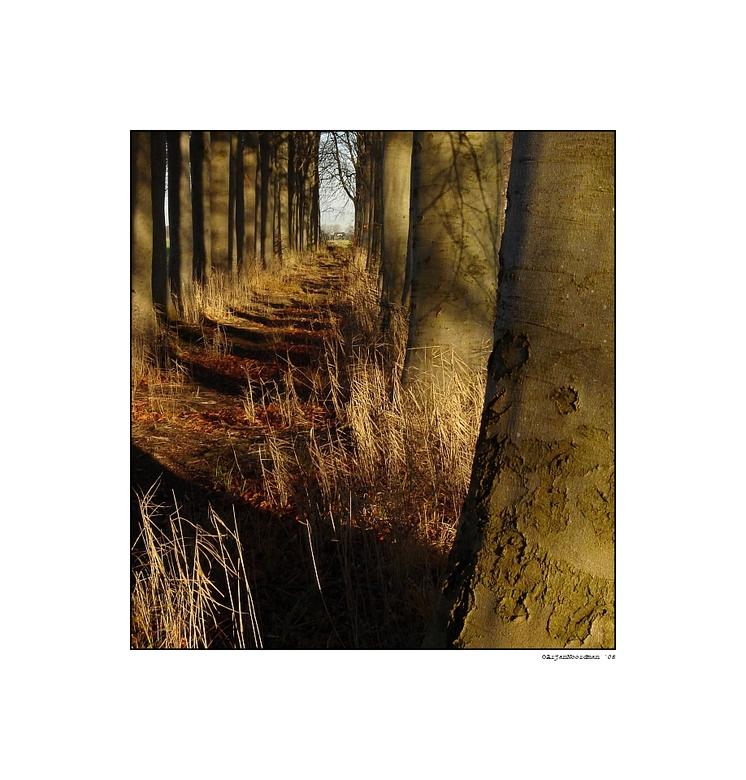 A Short Walk - Een pad midden tussen de weilanden op het Landgoed IJsselvliedt. Later bleek dat deze uitkwam midden op een boerenerf, niet de bedoelin