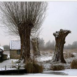 Knotters in winterslaap . . .