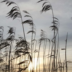 Riet en Sunrise