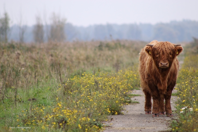 Noorderplassen - Noorderplassen, Almere. Natuurgebied.