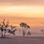 mist in de drunense duinen