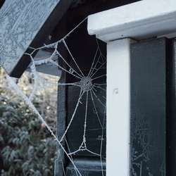 Frosty Spinnenweb