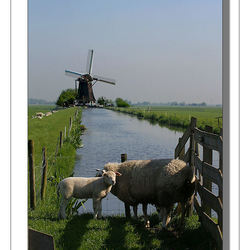 In de polder IV