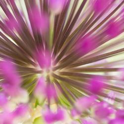 Allium 2.0