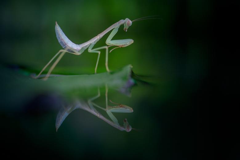 Beautiful creature... -