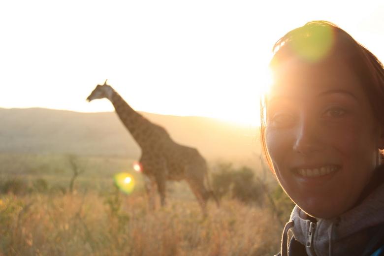 Op safari! - Bij zonsopkomst kwamen we deze giraffe tegen in Zuid-Afrika.