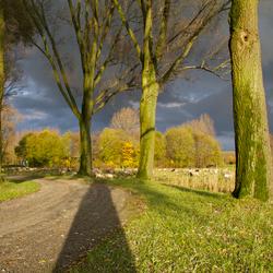 Dreigende lucht in de Biesbosch