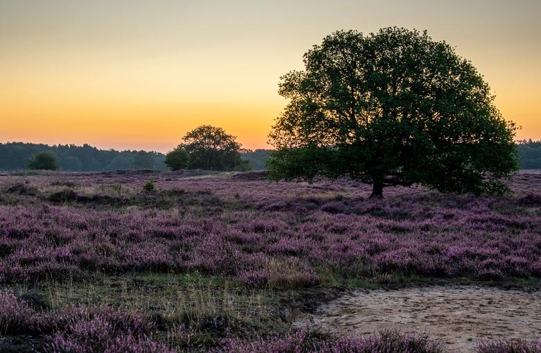 Sunrise Blaricums heide -