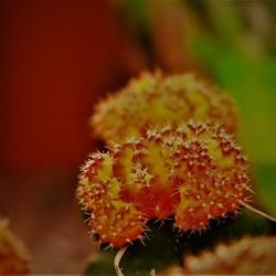 Macro bloem.