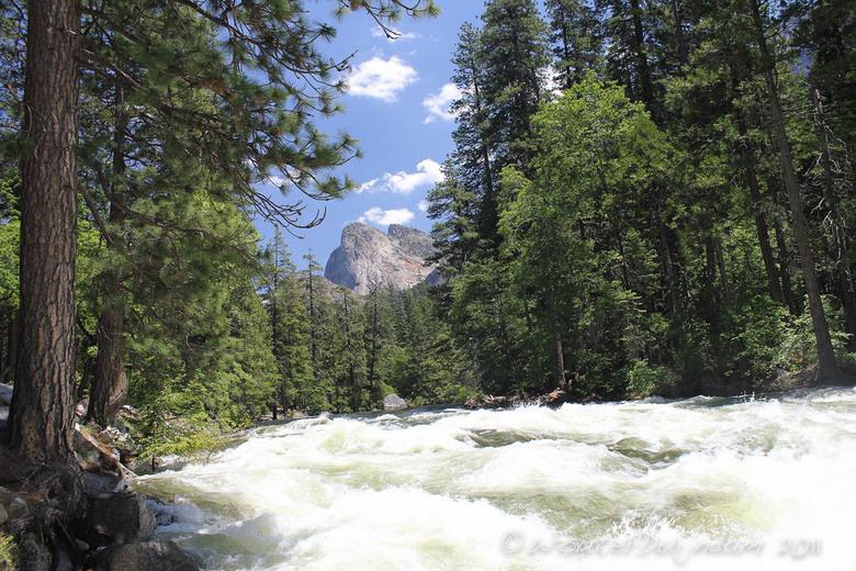 Beautiful Wildlife in Yosemite - De beken , watervallen en andere natuur is echt schitterend in Yosemite National Park.
