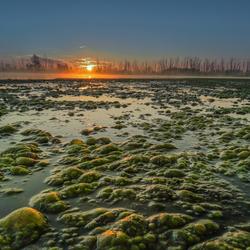 Algen
