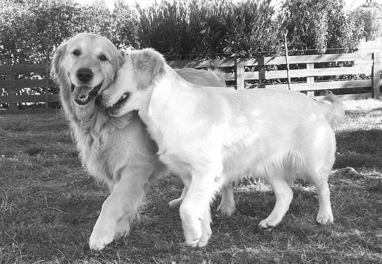 Sammy en Luna. Echte dierenliefde  - De liefde voor elkaar sprankelt er van af Na 12 dagen gescheiden te zijn geweest eindelijk terug samen. De natuur