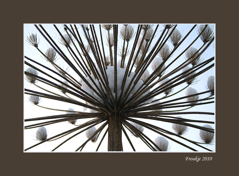 sneeuwparaplu - Bedankt voor de leuke reacties op mijn vorige foto .<br /> Groetjes Froukje