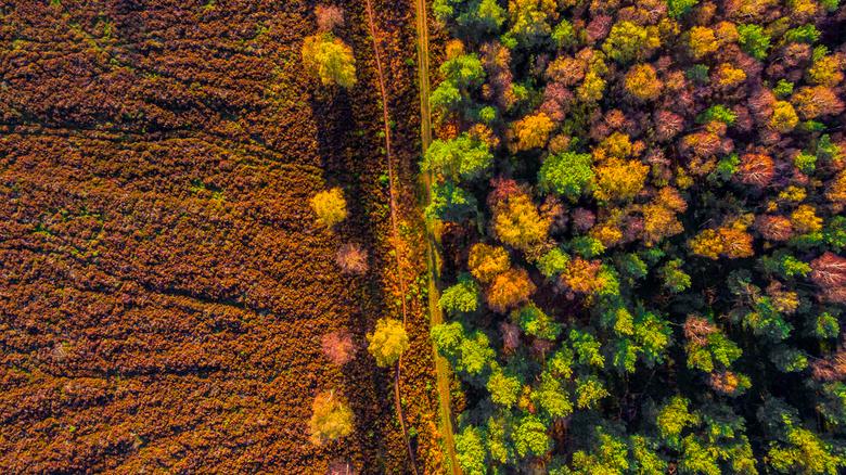 Herfst van boven - Herfstkleuren vanaf boven gezien