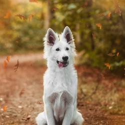 Herfst puppy