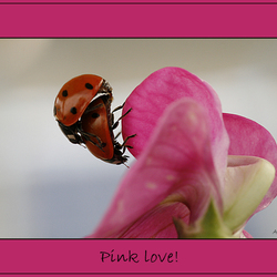 Pink love serie 2