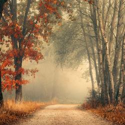 Twists of autumn