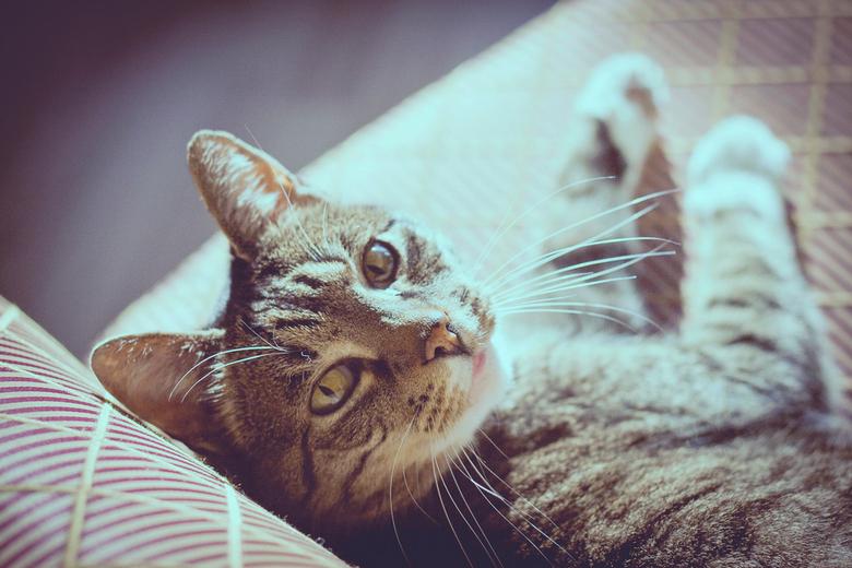 """Nieuwsgierige oogjes - Onze lieve kat Wimpie, die zoals altijd zo lekker nieuwsgierig kan zijn <img  src=""""/images/smileys/smile.png""""/>"""