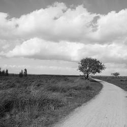 Het Fochteloërveen in zwart wit