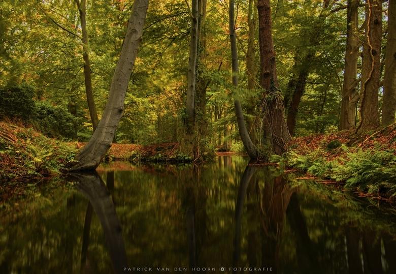 Tree reflections - Reflecties van gebogen bomen op landgoed Staverden.