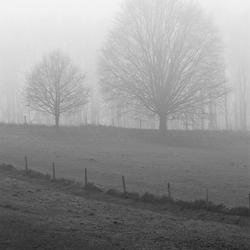 bomen en weide in de mist