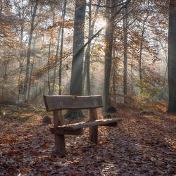 bankje in het bos