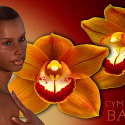 Cymbidium Balou