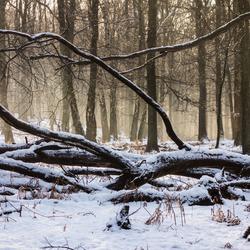 Winter - Rozendaal