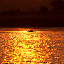 Zonsondergang met nijlpaard