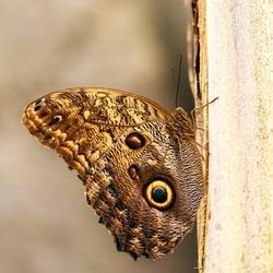 vlinder1 - kopie (683x1024)