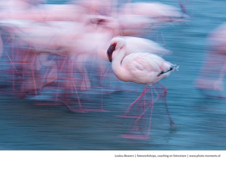 Flaming flamingo - In Walvisbay in Namibie ligt een prachtige lagune. Hier zijn o.a. flamigo's, pelikanen, pelsrobben en dolfijnen te zien. een h