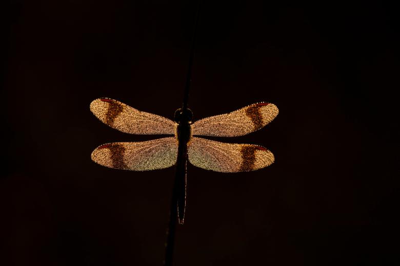 Goodmorning - Ook in kleur, met een vleugje dauw en een beetje strijklicht van de opkomende zon, is niet alleen het moment mooi om mee te maken, maar