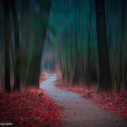 Dark hike