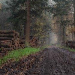 Een natte grijze dag in het bos