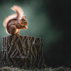 Moody Squirrel