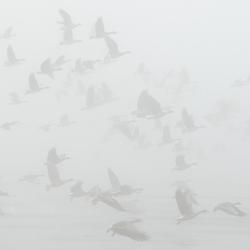 Kolganzen gaan de mist in