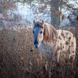 Paard tussen het koren