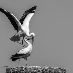Lente acrobatiek