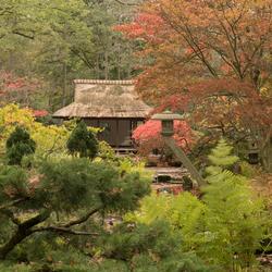 Japanse Tuin-1