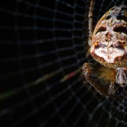 Friday 13th Spider