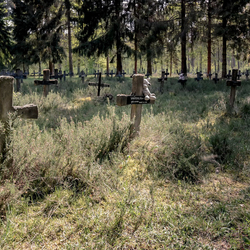 Cemetery of the insane