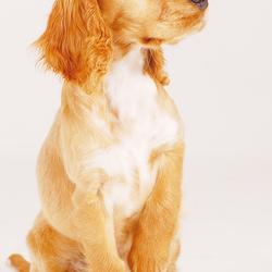Doggy style.....