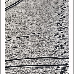 Tracks in he snow I