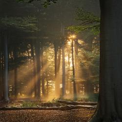 Glimpse of dawn