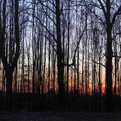 - The Sunset Trees -