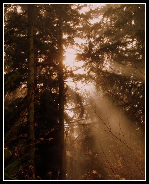 En toen was er licht...in kleur - Afgelopen zaterdag de 21 november heb ik een beginnersworkshop natuur- en landschapsfotografie gevolgd van fotograaf